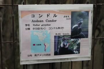 東京上野動物園 58