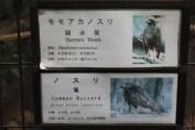 東京上野動物園 59