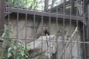 東京上野動物園 60
