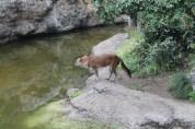 東京上野動物園 74