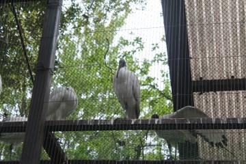 東京上野動物園 77