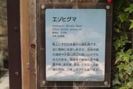 東京上野動物園 78