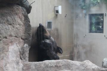 東京上野動物園 80