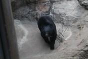 東京上野動物園 82