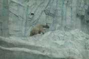 東京上野動物園 83