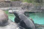 東京上野動物園 85