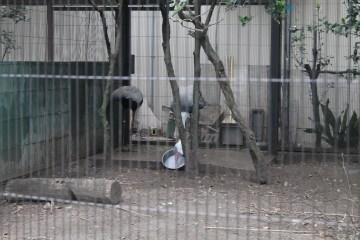 東京上野動物園 88