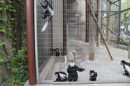 東京上野動物園 101
