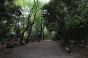 東京靖国神社 15