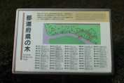 A list of prefectural trees