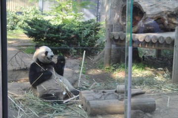 Another look at a panda