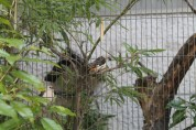 東京上野動物園 117