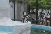 東京上野動物園 122