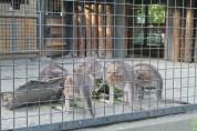 東京上野動物園 124