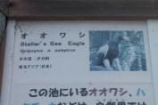 東京上野動物園 134