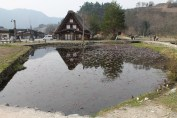 A pond (with fish)