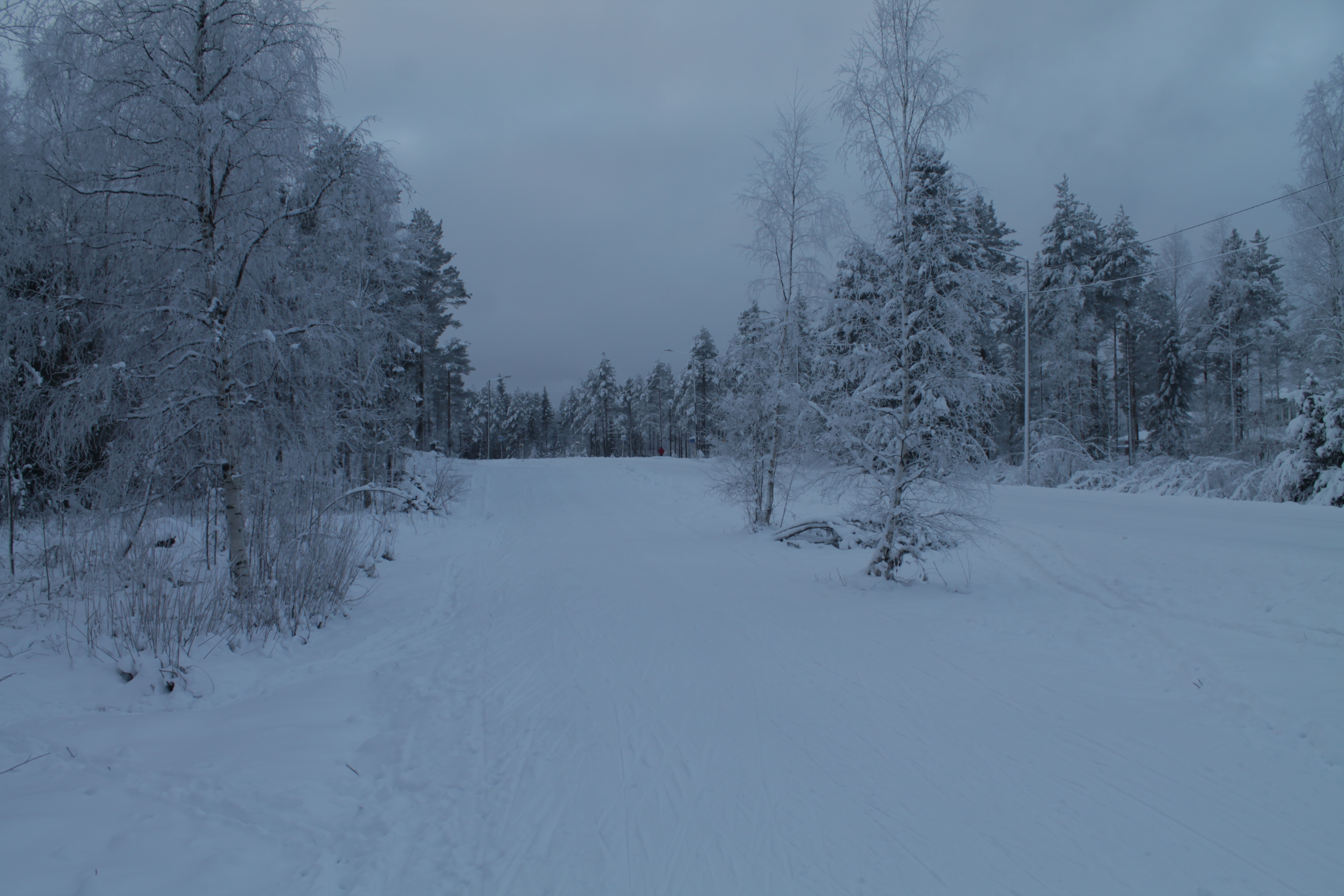 Taking a shortcut through a swampy, snowy forest | Life of the (not