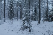Raahe Winter 3