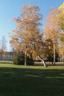 Joensuu Oct18_6