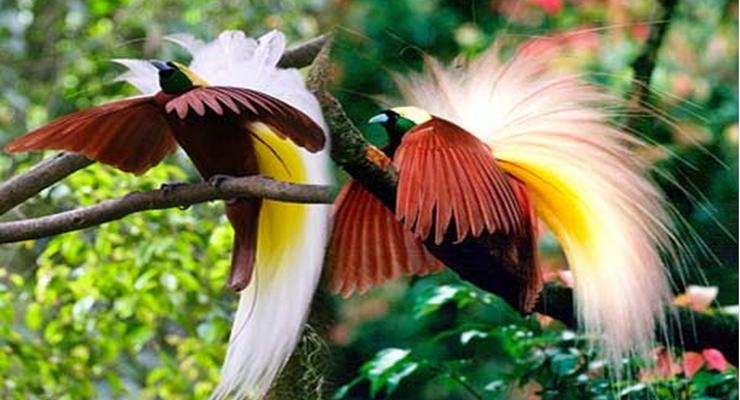 Taman-Burung-Cendrawasih-Raja-Ampat
