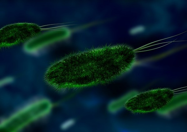 bakterija1