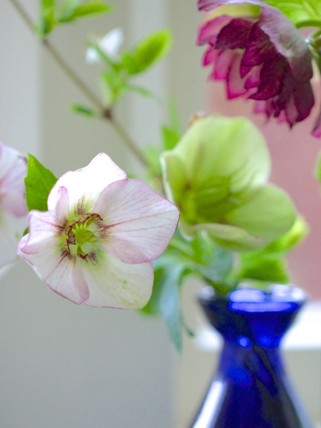 Hellebores-and-Snowdrops