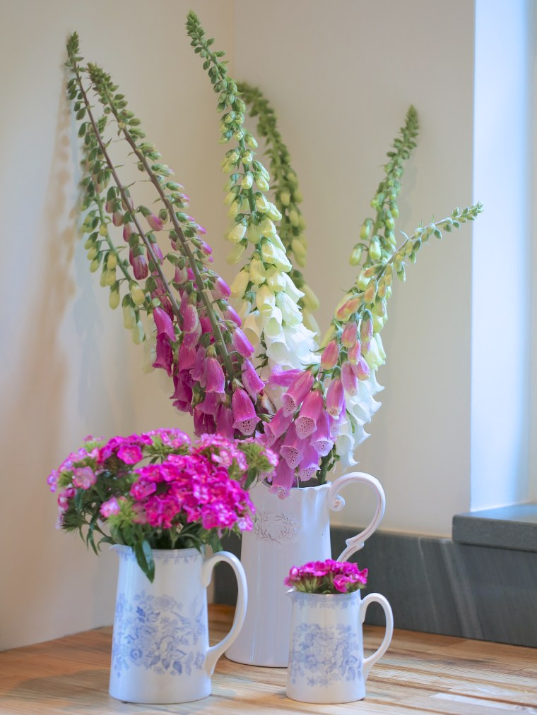 Foxgloves-and-Sweet-Williams