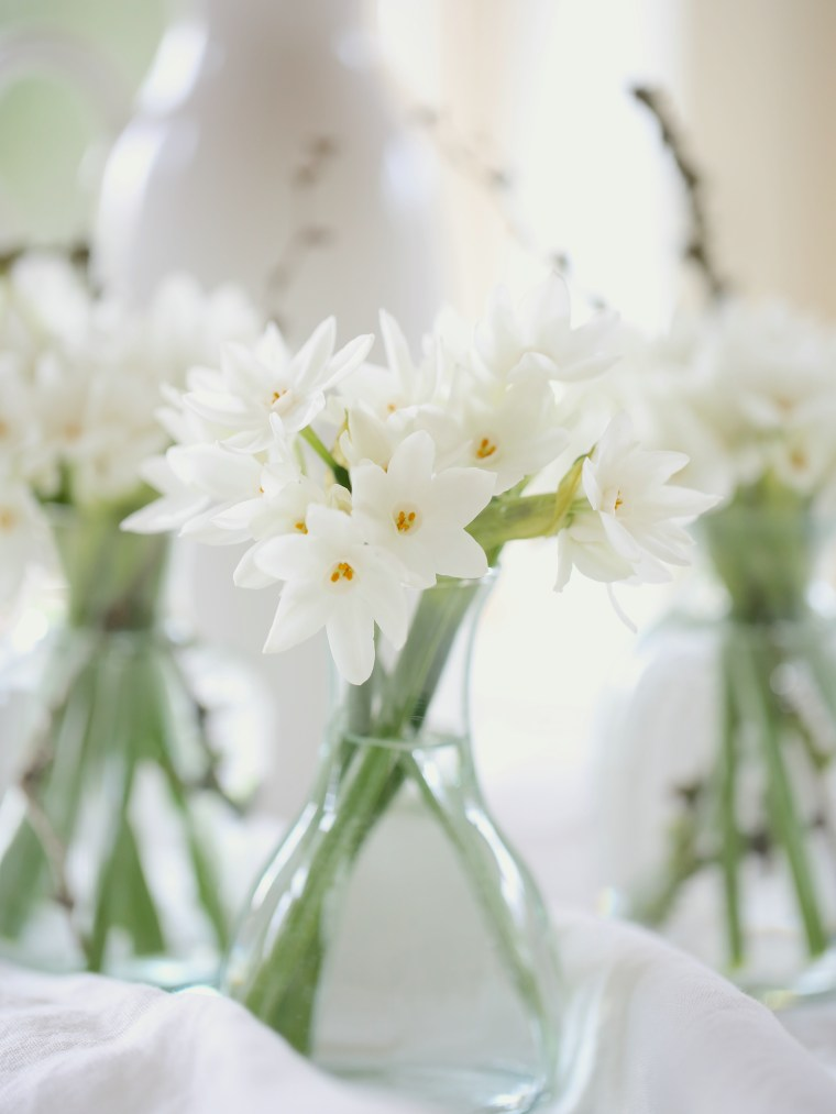 Paperwhite-narcissi