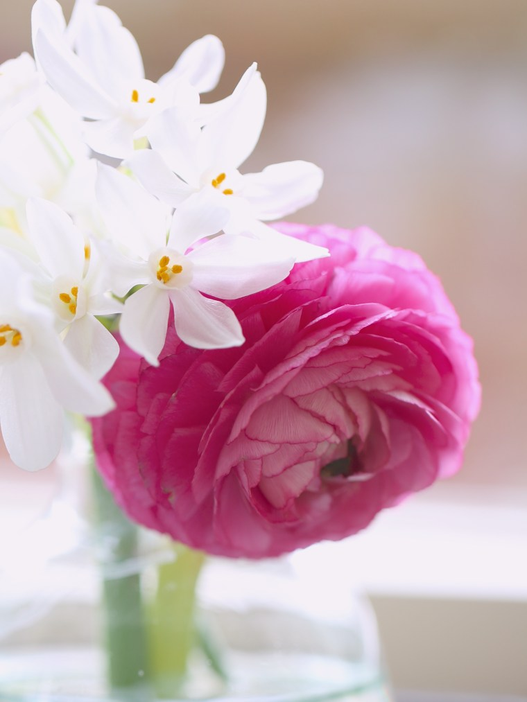Narcissi-and-Pink-Ranunculus