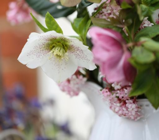 Hellebores arranged in a jug and photographed outside.