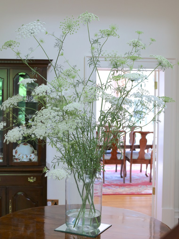 Large-scale-ammi-majus-arrangement-in-a-mason-jar