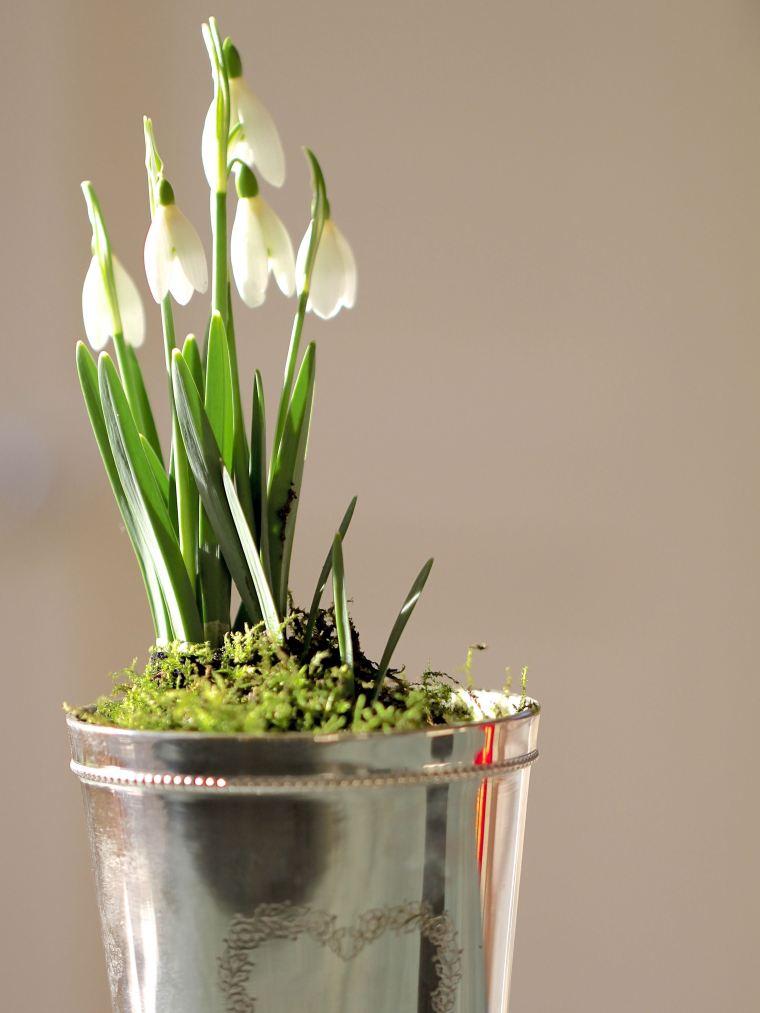 Snowdrops in a silver vase.