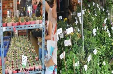 0 Chatuchak Market 5