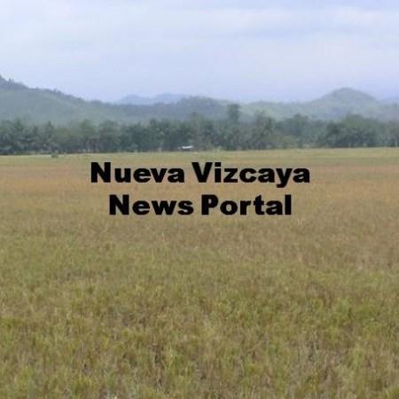 Nueva Vizcaya News Portal