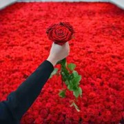 Το τριαντάφυλλο του ανέμου…