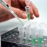 Το θαύμα των βλαστοκυττάρων – τριχογέννεση