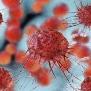 Το ανοσοποιητικό σύστημα των αλπάκα αποκαλύπτει πιθανή θεραπεία για τον καρκίνο