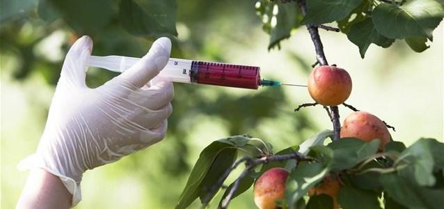 Νέα αυστηρή νομοθεσία για τις Γενετικά Τροποποιημένες Καλλιέργειες και στην Ευρώπη