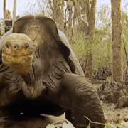Ο «Μοναχικός Γιώργος»: Το γονιδίωμα της τελευταίας χελώνας του είδους της αποκαλύπτει τα μυστικά της γήρανσης