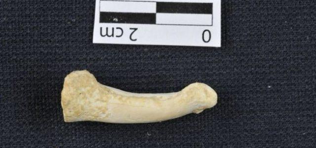 Νέο είδος ανθρώπου ανακαλύφθηκε σε σπήλαιο στις Φιλιππίνες
