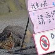 Houtong: Το χωριό της Ταϊβάν που οι εκατοντάδες αδέσποτες γάτες το έσωσαν από τη λήθη