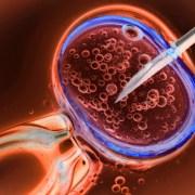Οι ερευνητές έχουν εκπαιδεύσει την τεχνητή νοημοσύνη για να βαθμολογεί τα ανθρώπινα έμβρυα με υψηλό βαθμό ακρίβειας