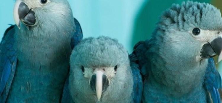 Άγρια ζώα που εξαφανίστηκαν από τον πλανήτη το 2018