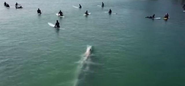 Βίντεο: Φάλαινα συνοδεύει σέρφερς στον Ειρηνικό