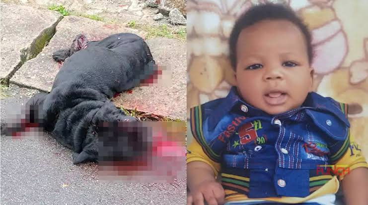Mad-dog-tears-off-baby's-scalp-in-Abuja-barracks