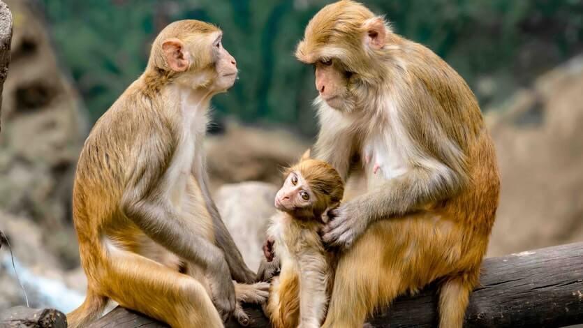 in-delhi-monkeys-attack-laboratory-technician-escape-with-covid-19-samples