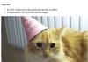 Craigslist Cat Birthday Party