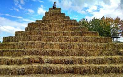 Finding Good Employees…….Feel like you are looking for a needle in a haystack?