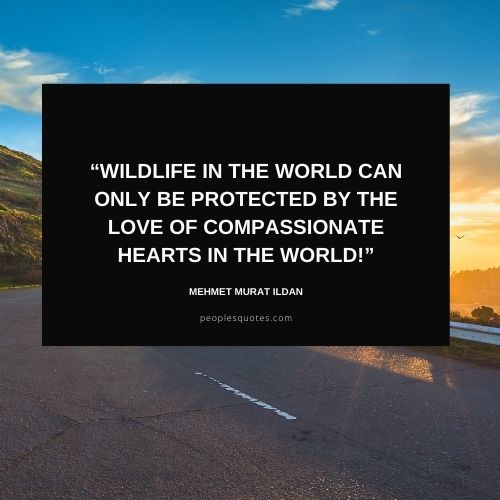 Quotes about Protecting Wildlife with Images