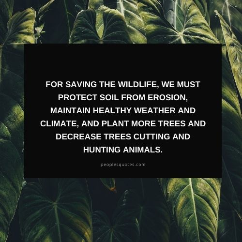 saving the wildlife quotes